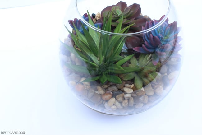 Combine different succulent in a variety of colors and leaf shapes.
