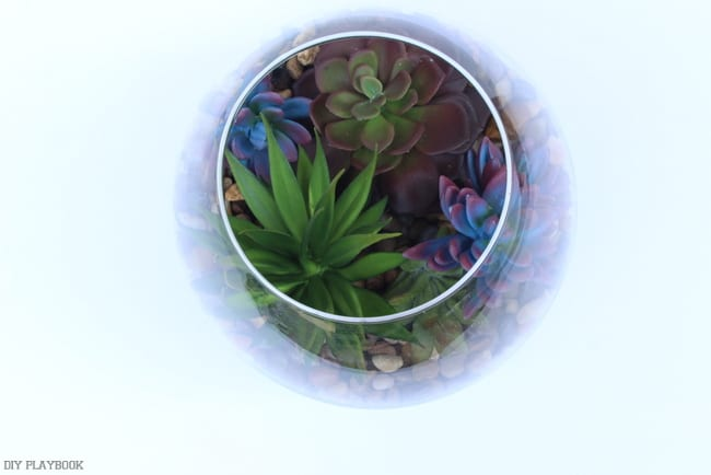 A view of the succulent arrangement from above.