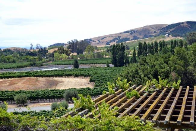 Vineyard-View