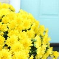 These bright yellow flowers pop against the blue front door.