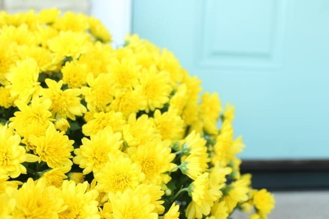 Fresh yellow flowers look adorable against the blue front door.