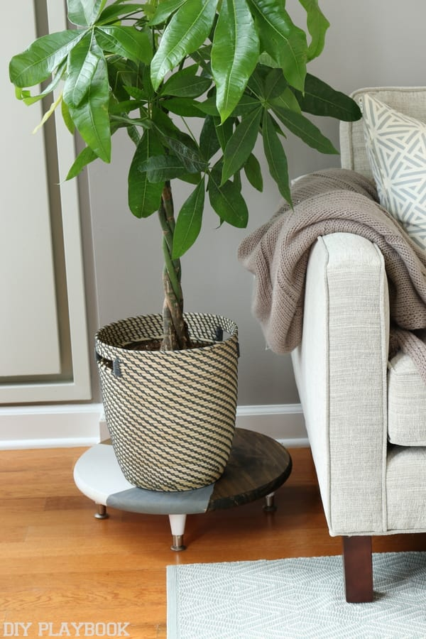 The plant is from Ikea and looks great on this super easy DIY plant stand.
