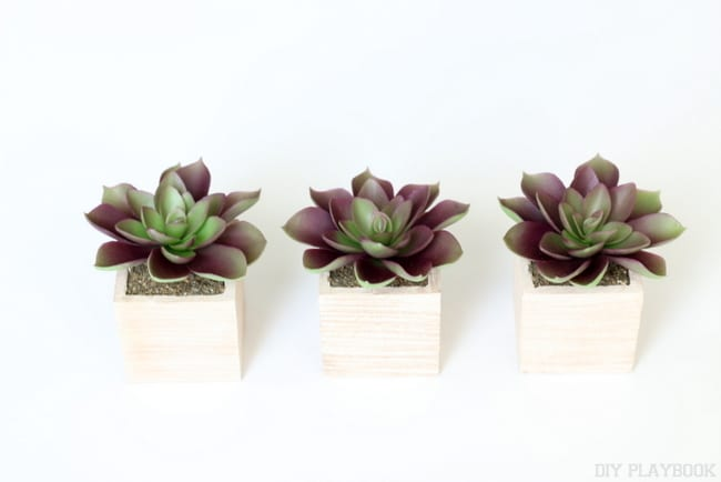 succulent_palm_free_printable_gallery_wall-011
