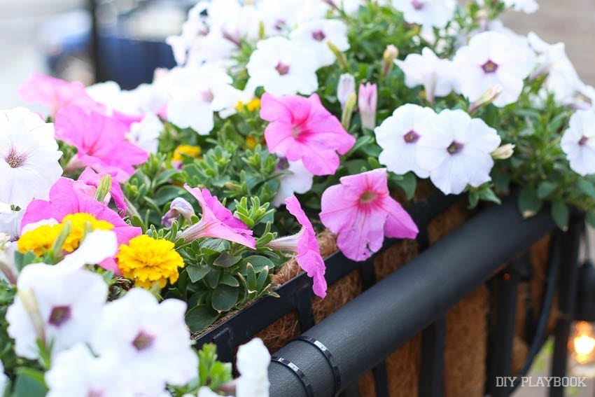 flowers-outside-balcony