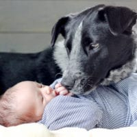 It's possible to take great photos of babies with pets!