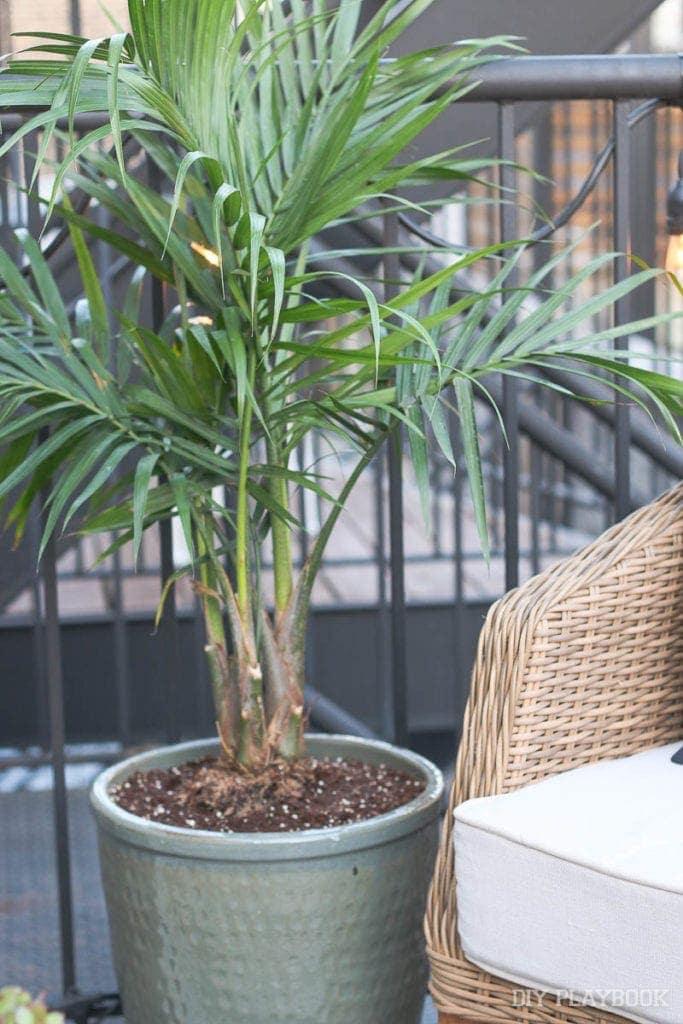 palm-tree-patio