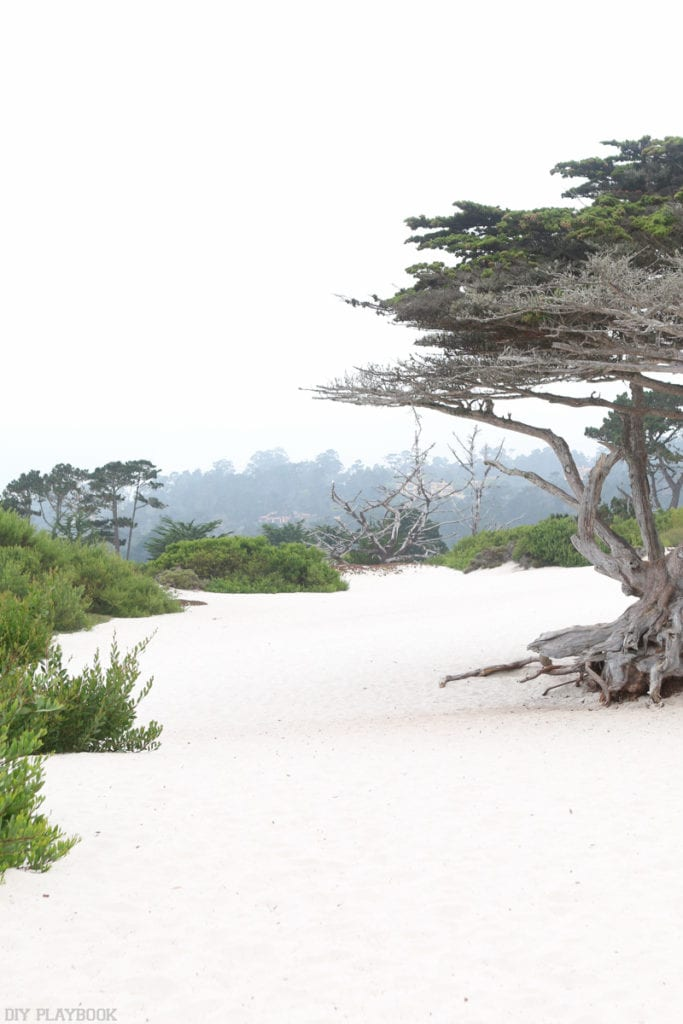 carmel-by-the-sea-beach-travel