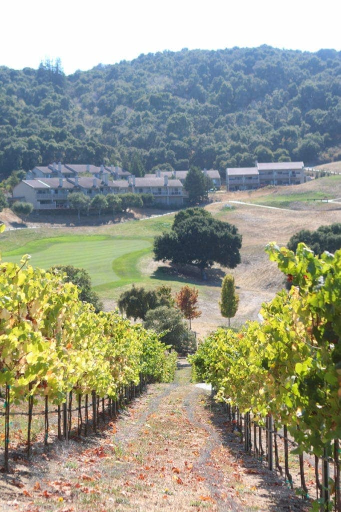 A vineyard at Carmel Valley Ranch.
