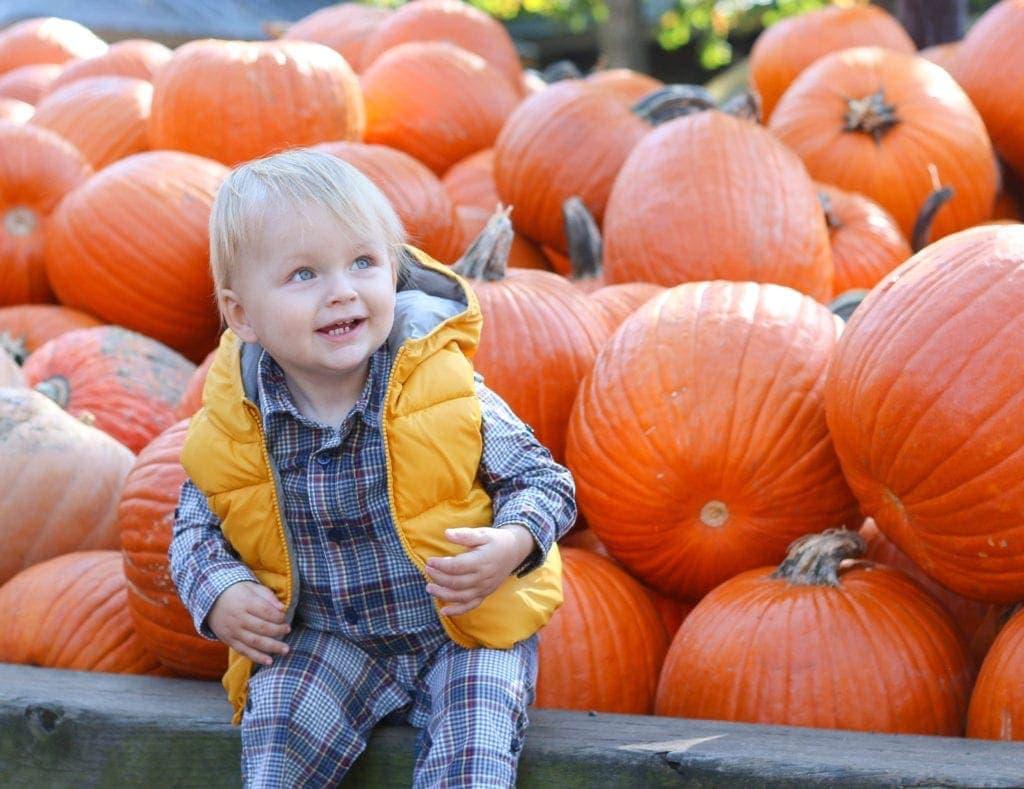 harry-pumpkin