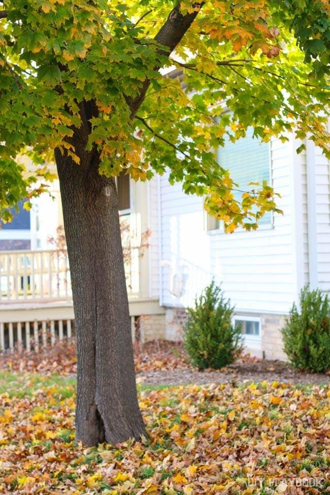 fall-tree-leaves-cedarburg