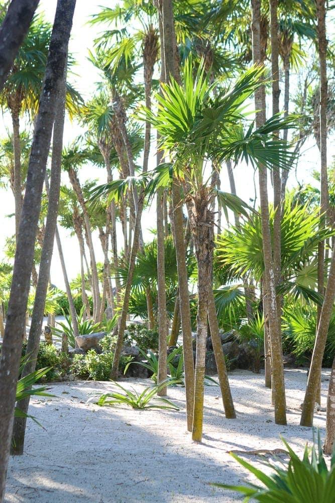 riveria_maya_mexico_vacation_travel-4