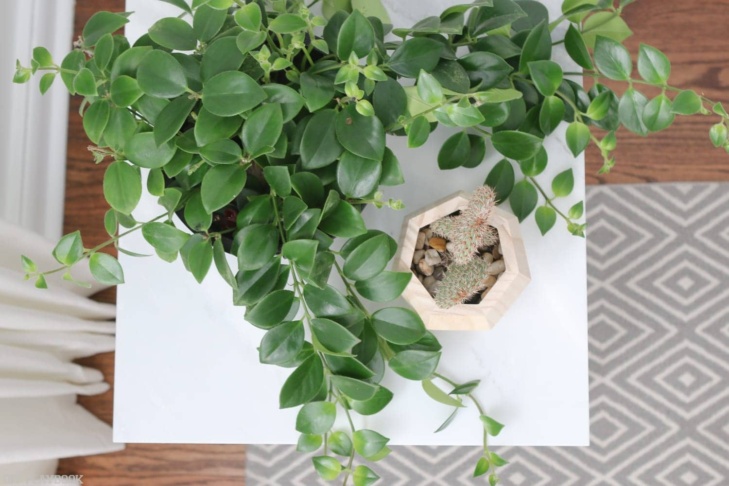 hairpin_table_tutorial_plant-10