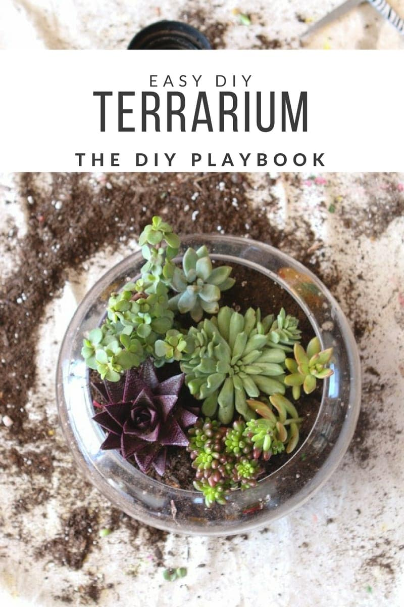 Creating A Super Easy Diy Terrarium For Your Coffee Table