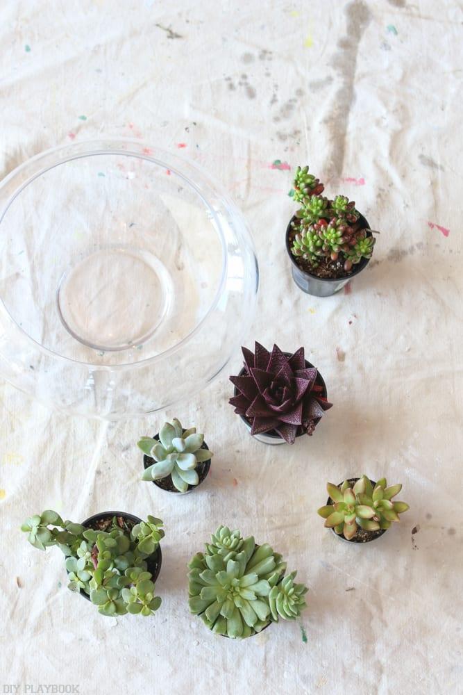 DIY_Terrarium