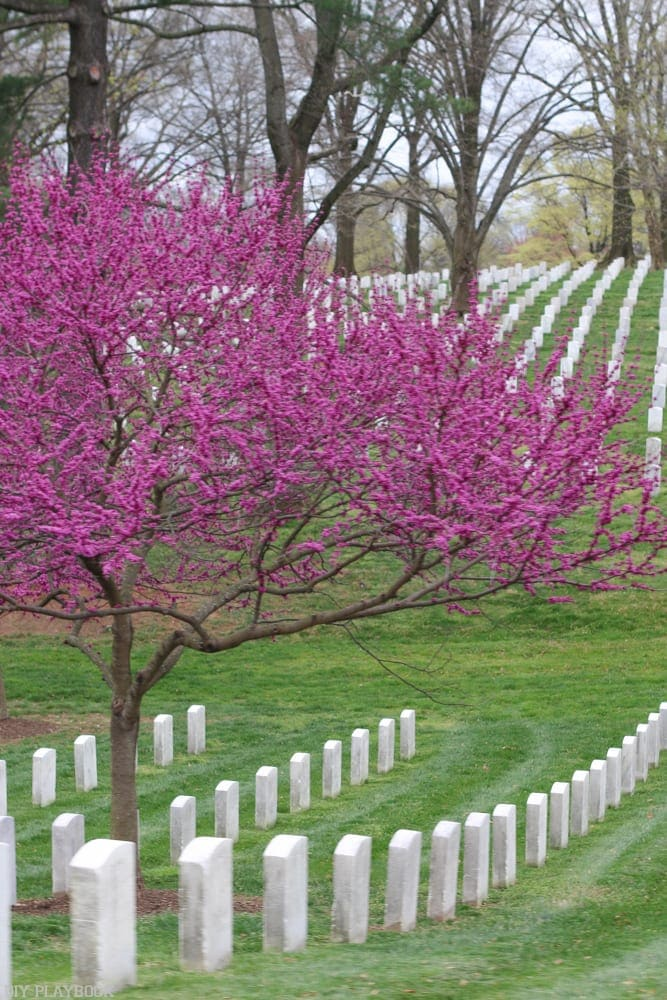 Arlington National Cemetery in the springtime.