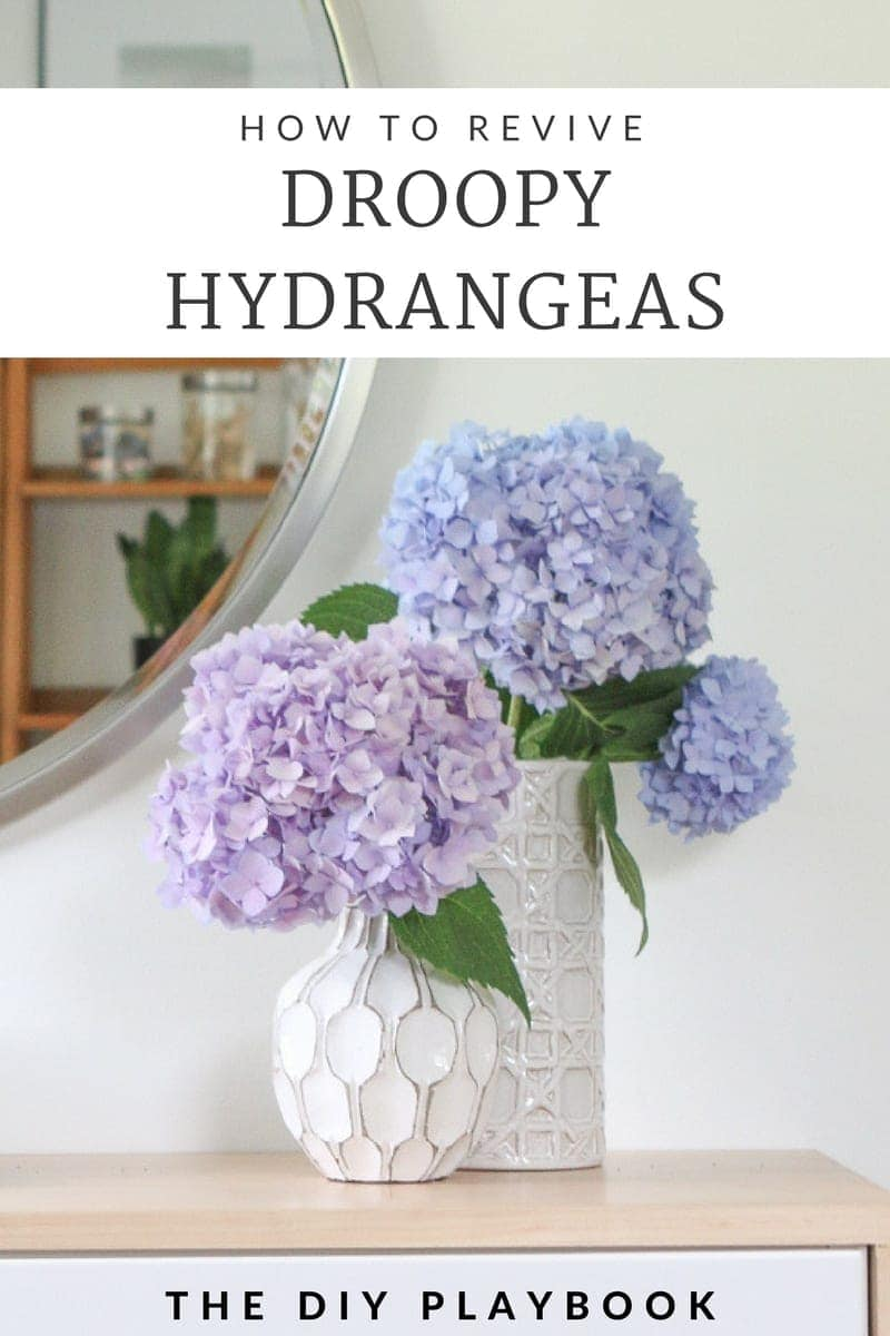 how to revive droopy hydrangeas
