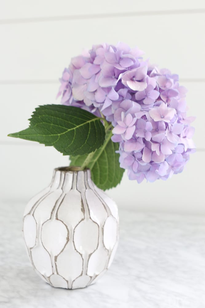 how-to-revive-droopy-hydrangeas-2