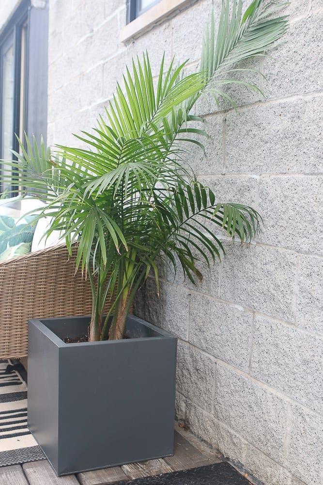 palm-tree-planter