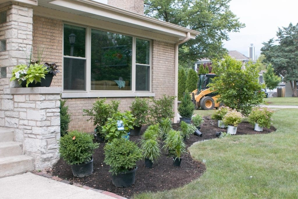 choosing the right plants for your landscaping