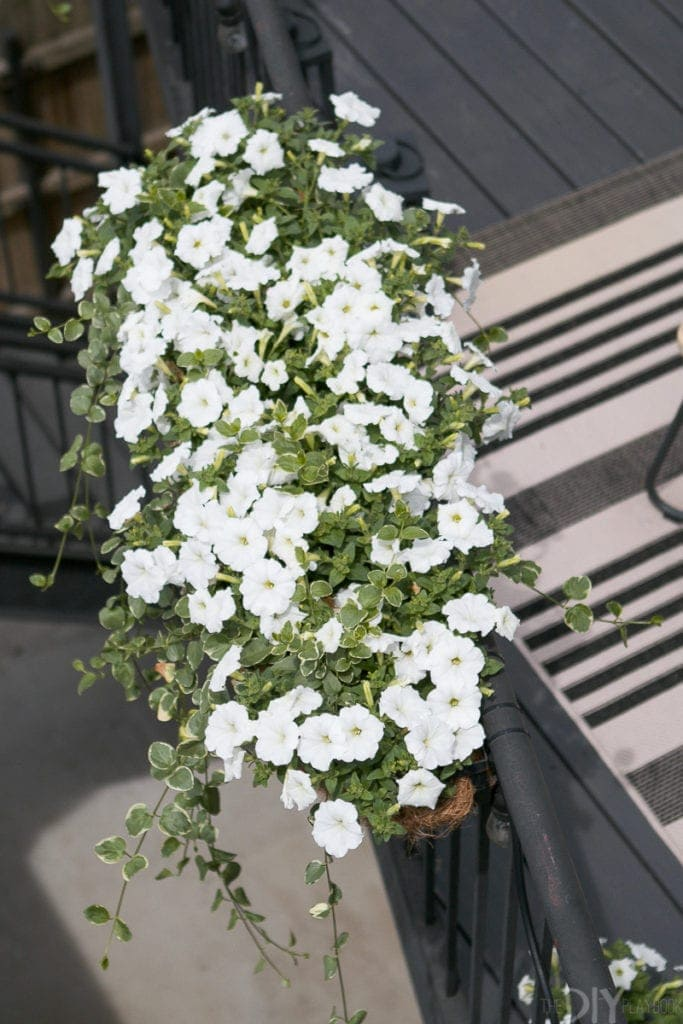 These white wave petunias love this sunny balcony spot