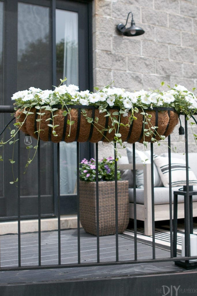 Flower boxes with growing ivy and wave petunias