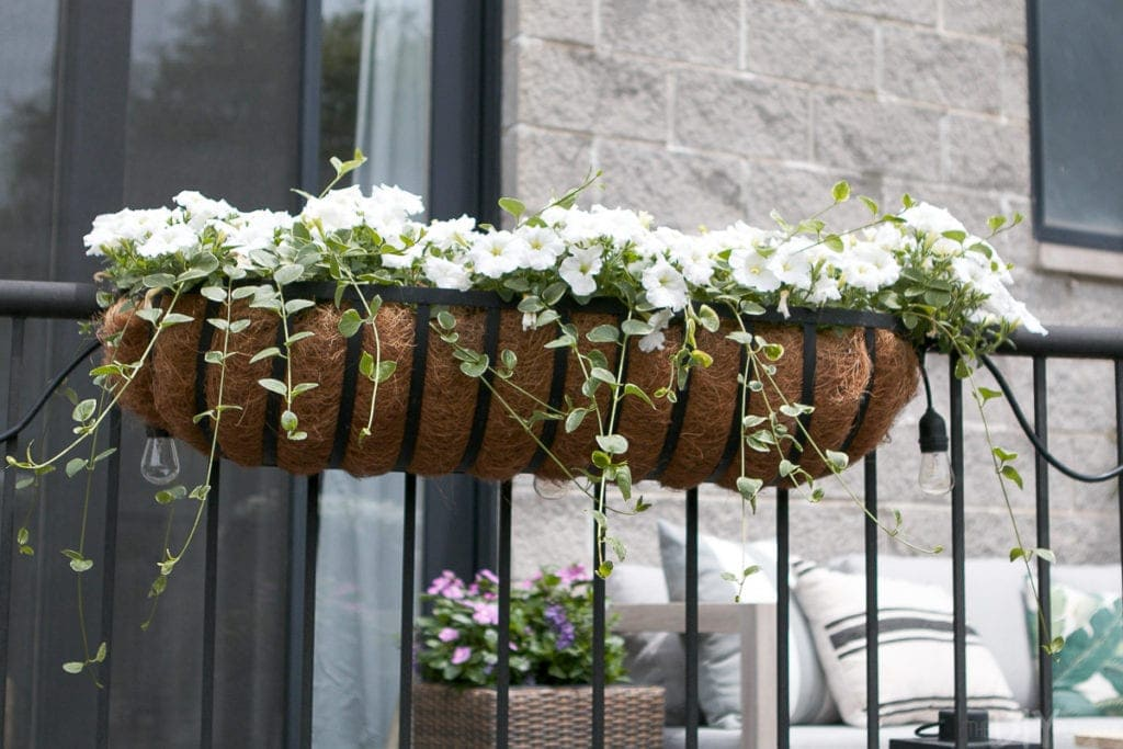 These flower boxes are overflowing with wave petunias