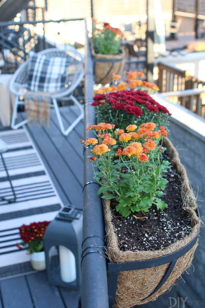 Planting mums in flower boxes