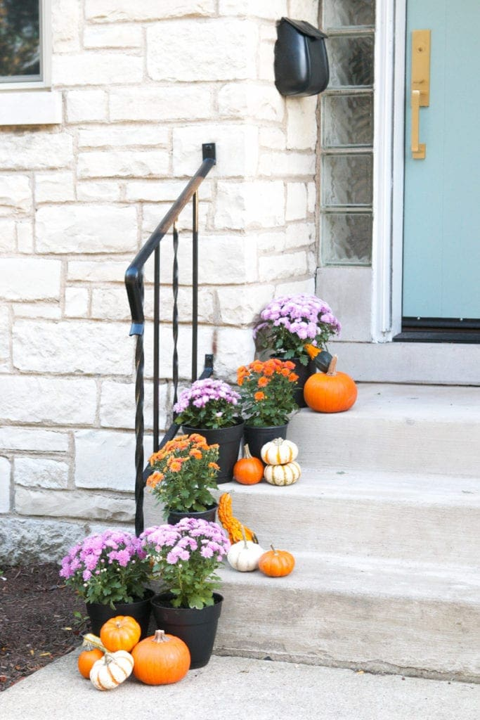 fall mums with mini pumpkins on the porch