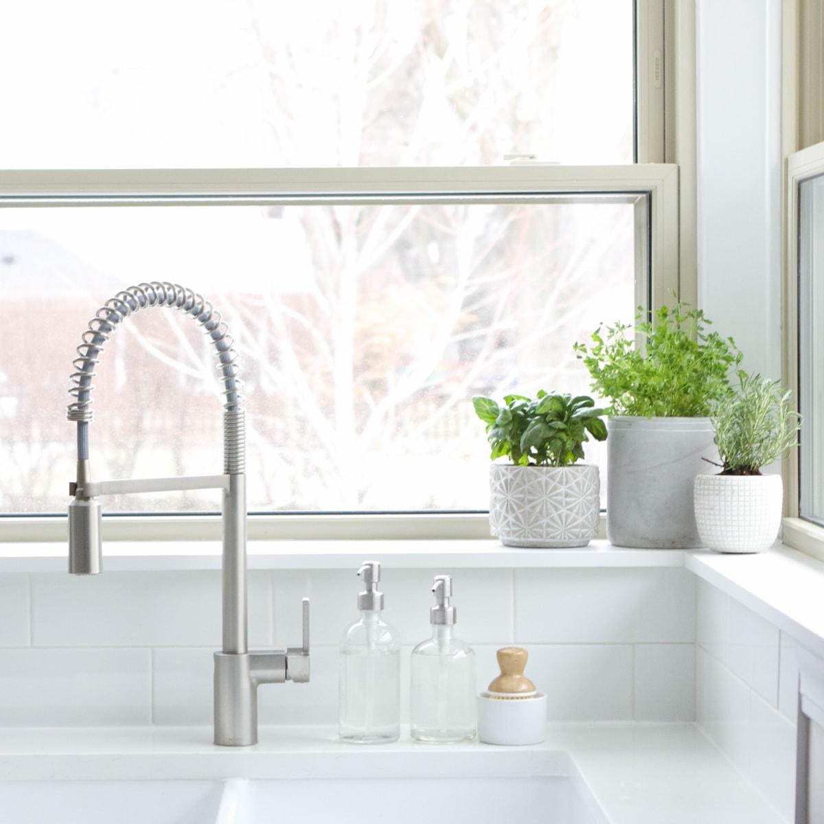 kitchen sink herb garden
