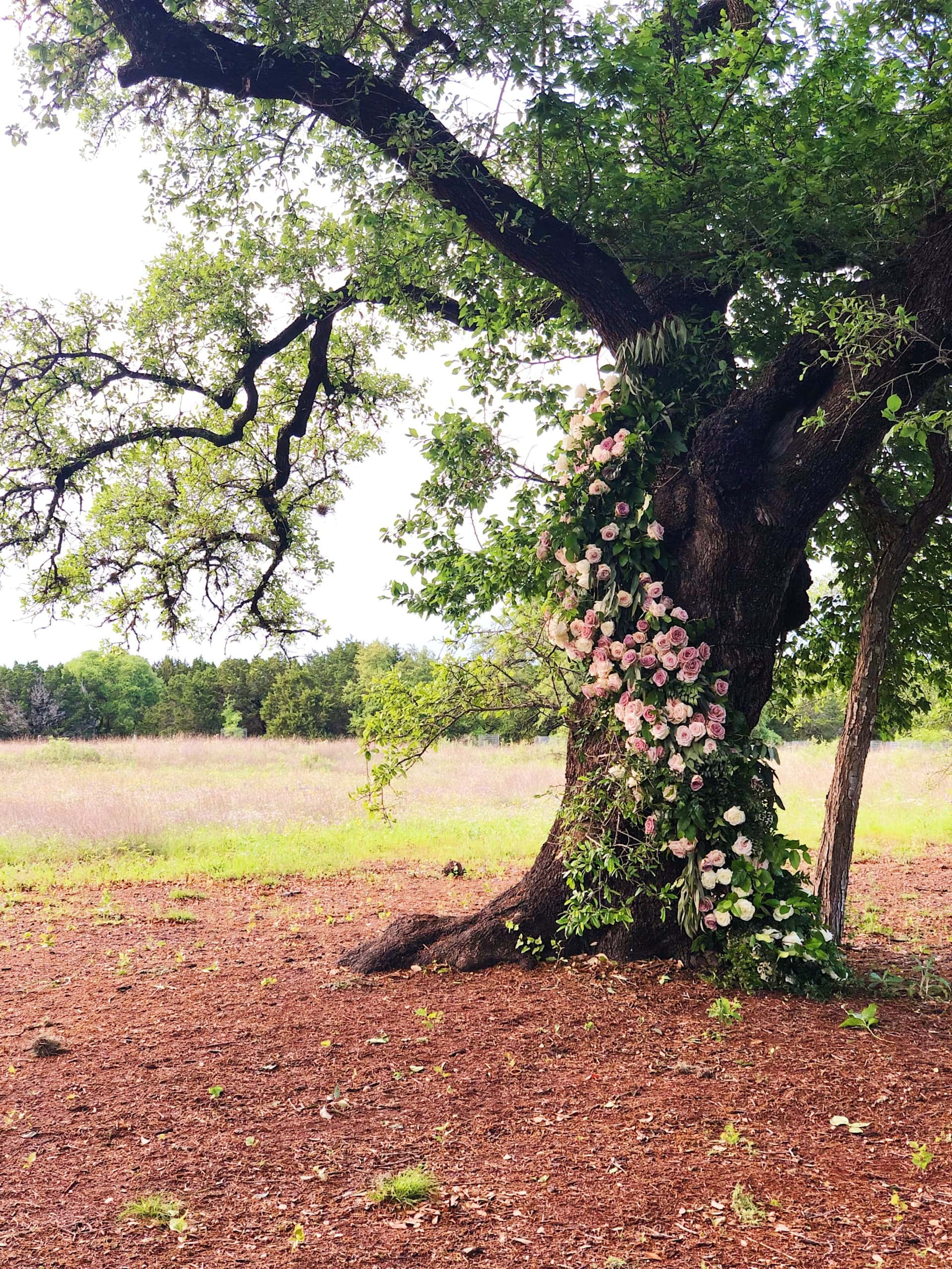 Getting married under a tree outside