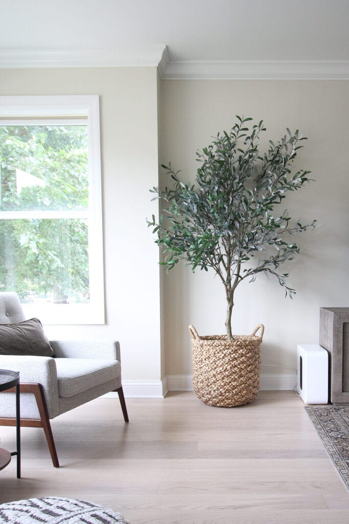 Faux olive tree from Crate and Barrel