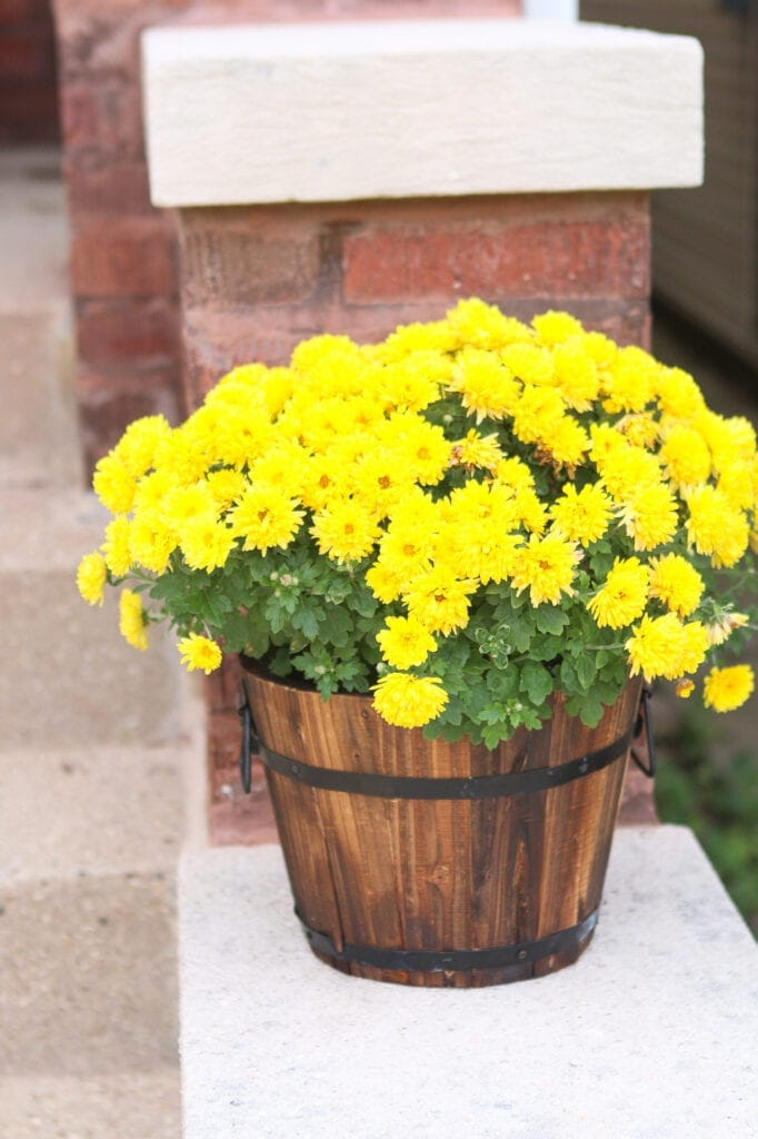 Rustic mums planter from Walmart