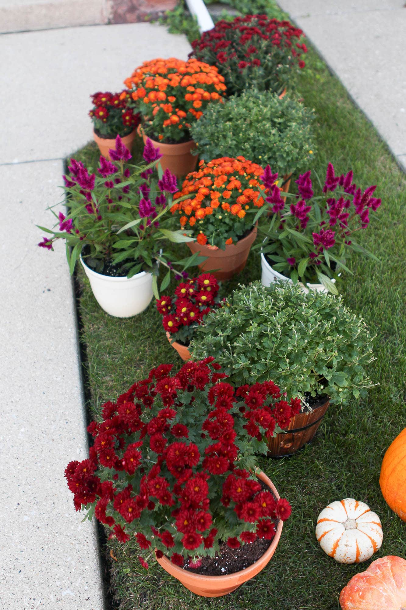 Planting mums for my fall front porch