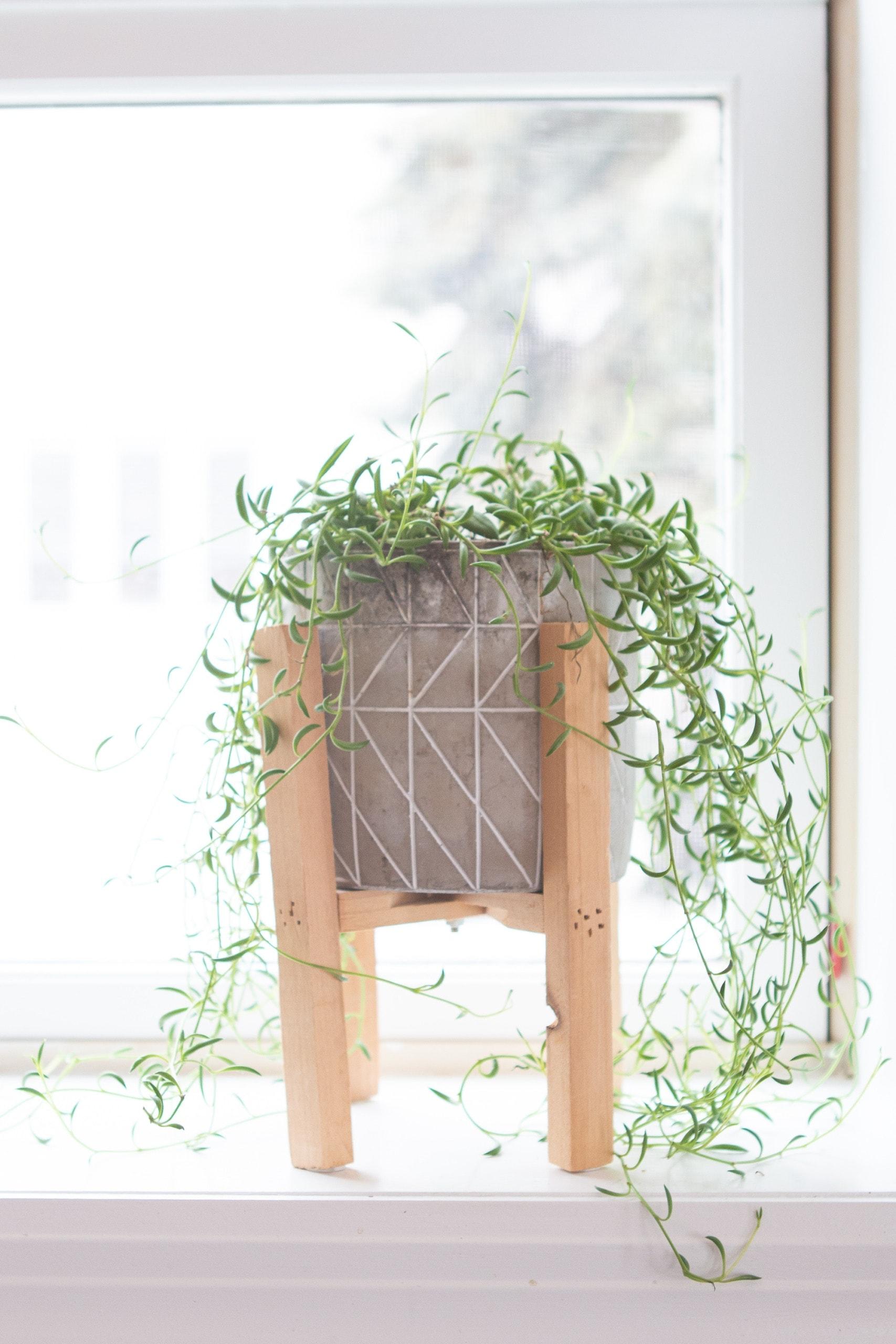 My best indoor plants