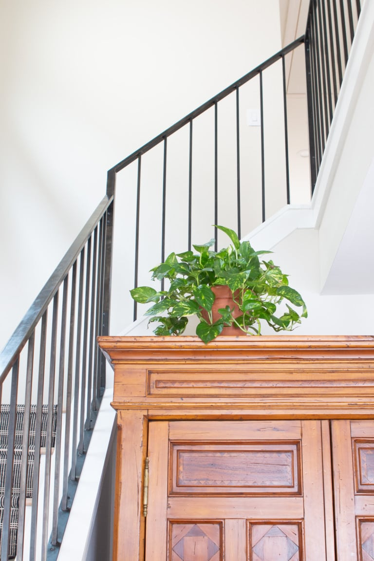 Indoor plants in our home