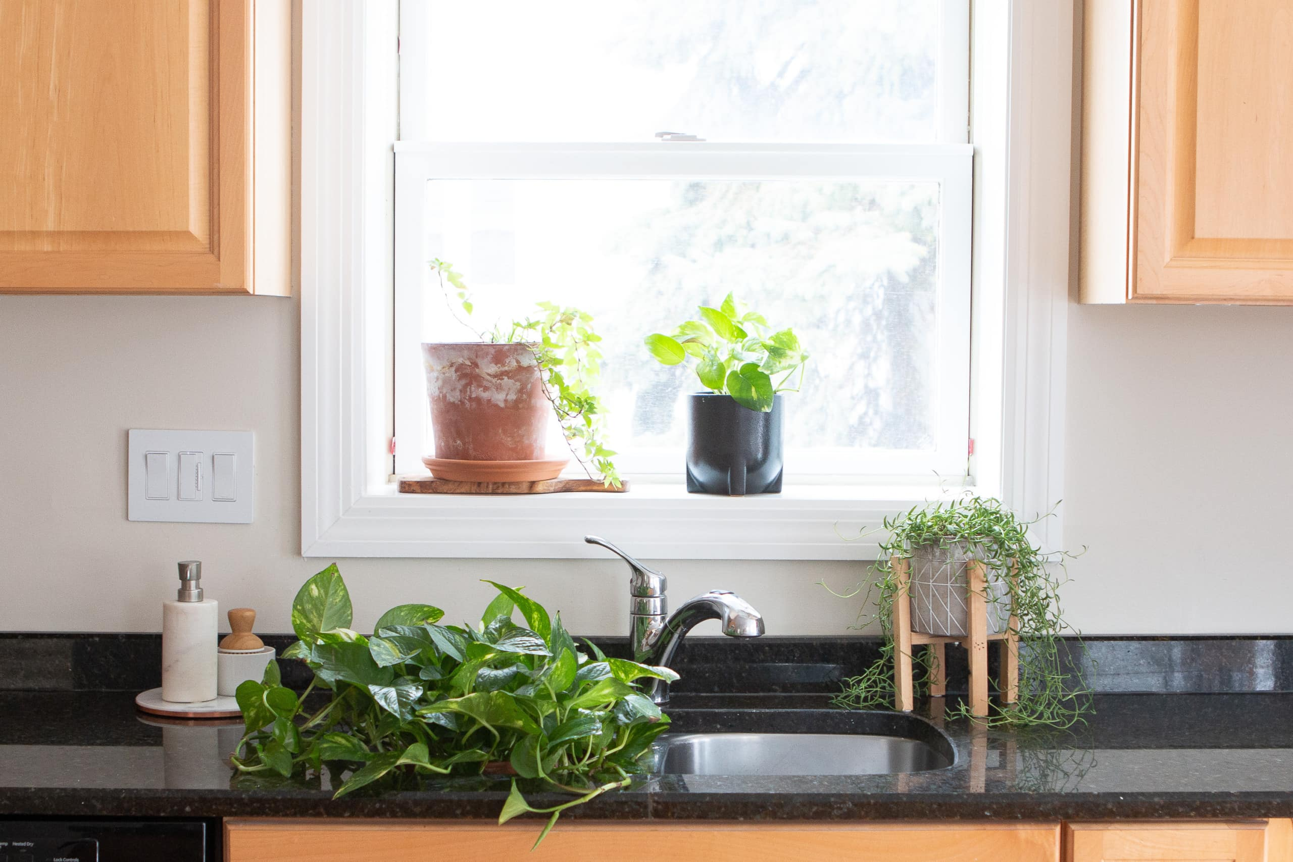 My favorite indoor plants for my house