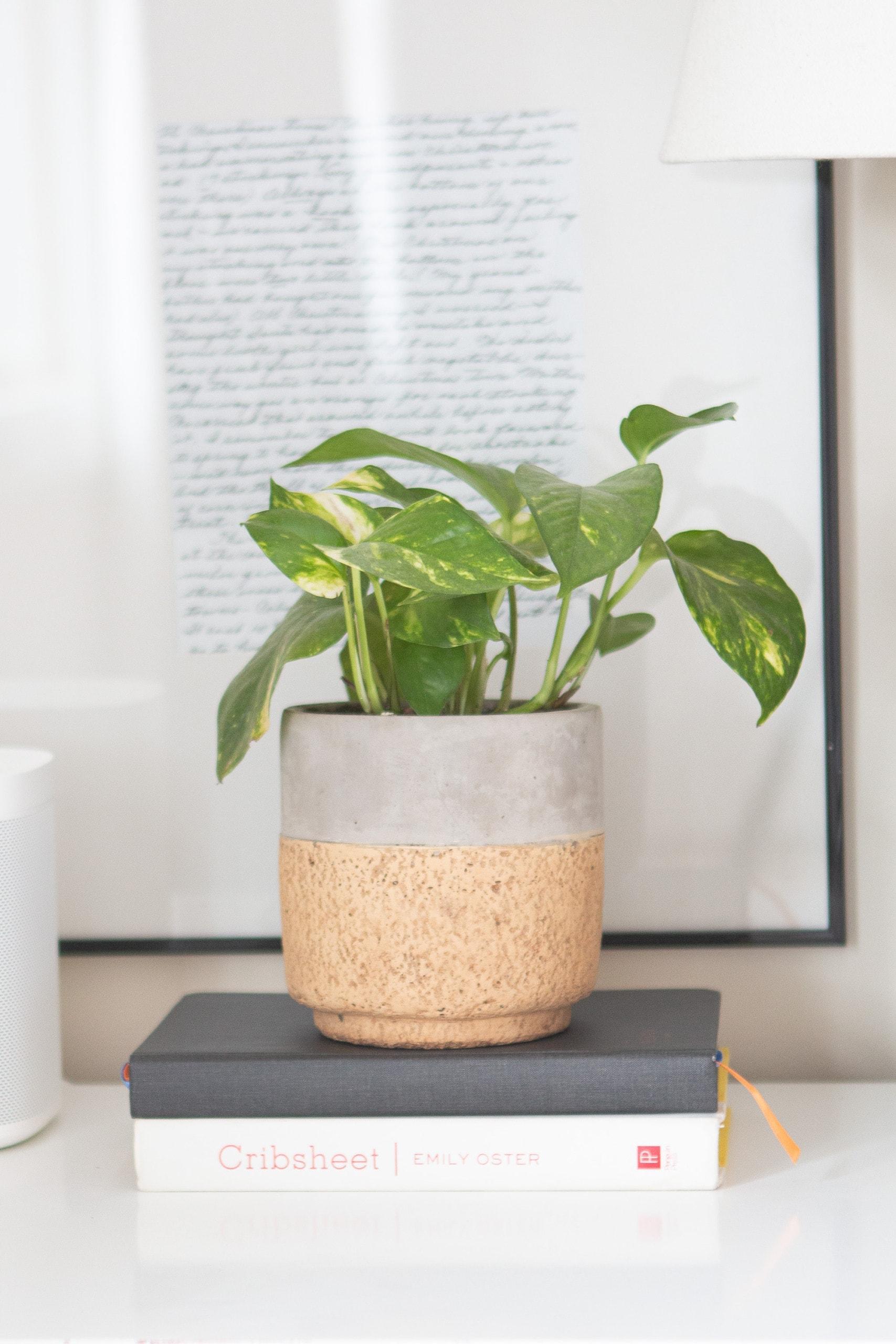 Pothos plant in master bedroom