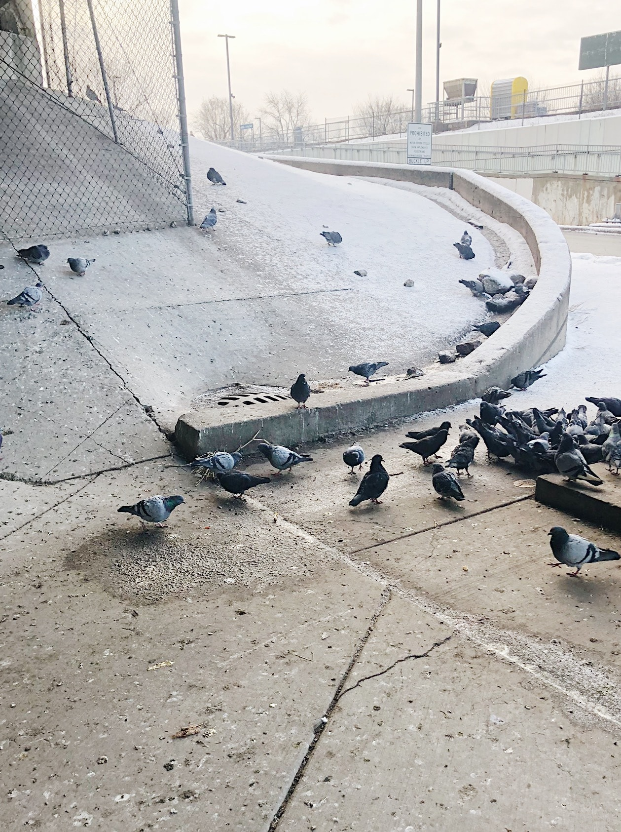 Pigeons under the train