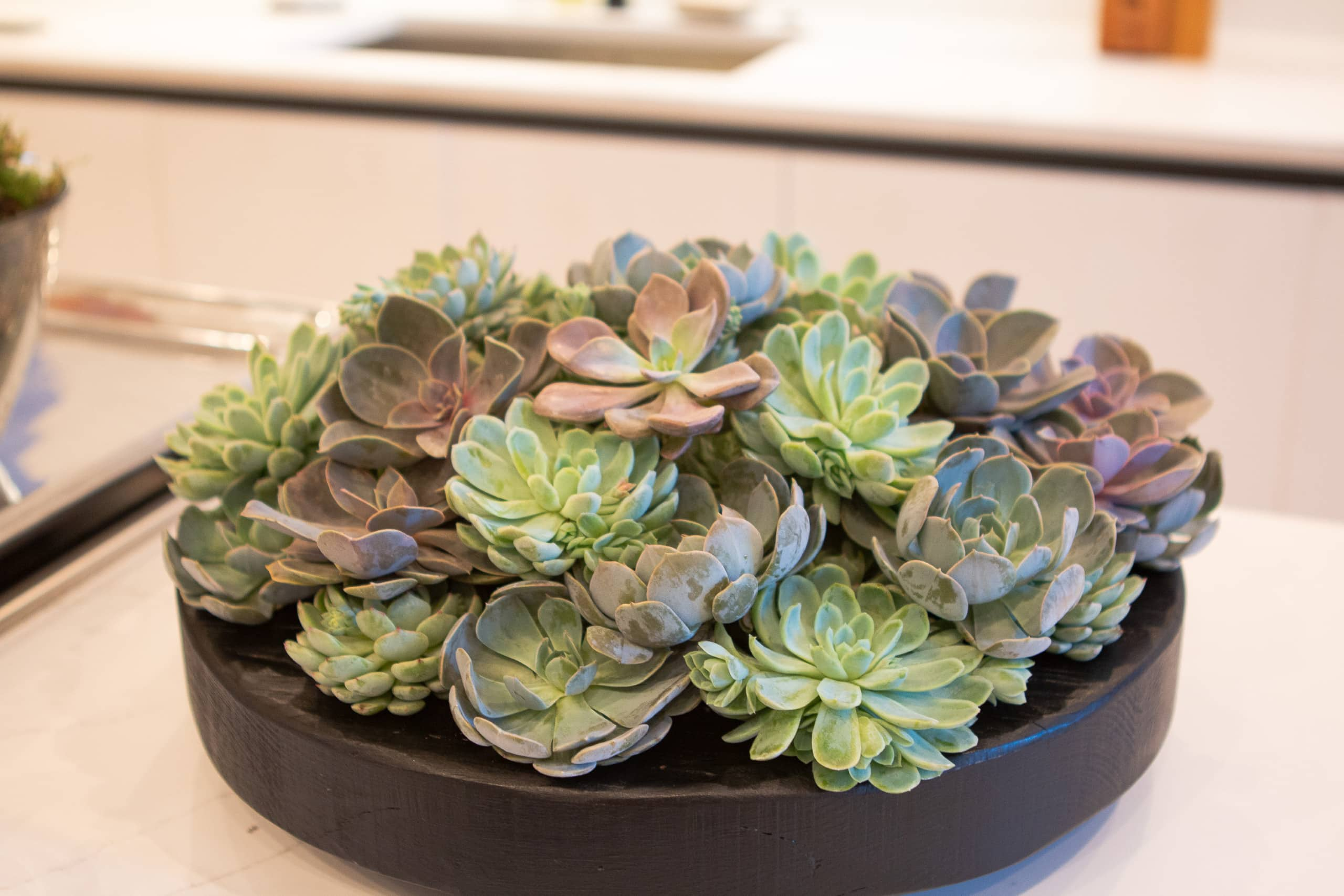 Fresh succulents
