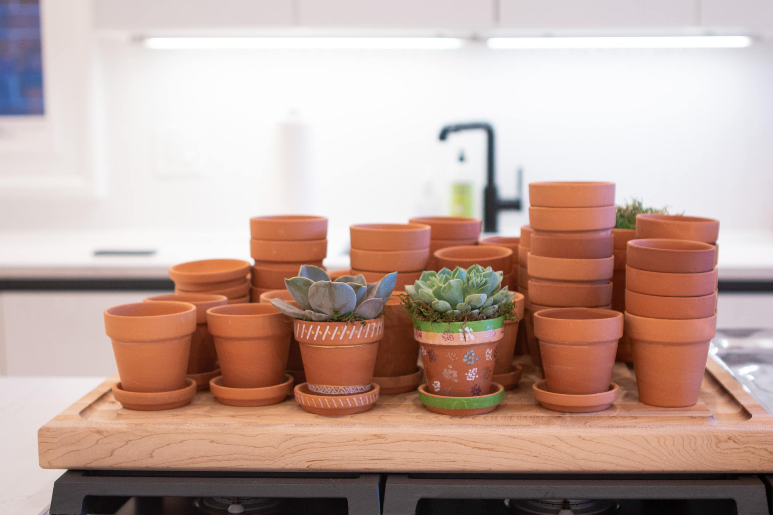 Terra cotta pots for succulents