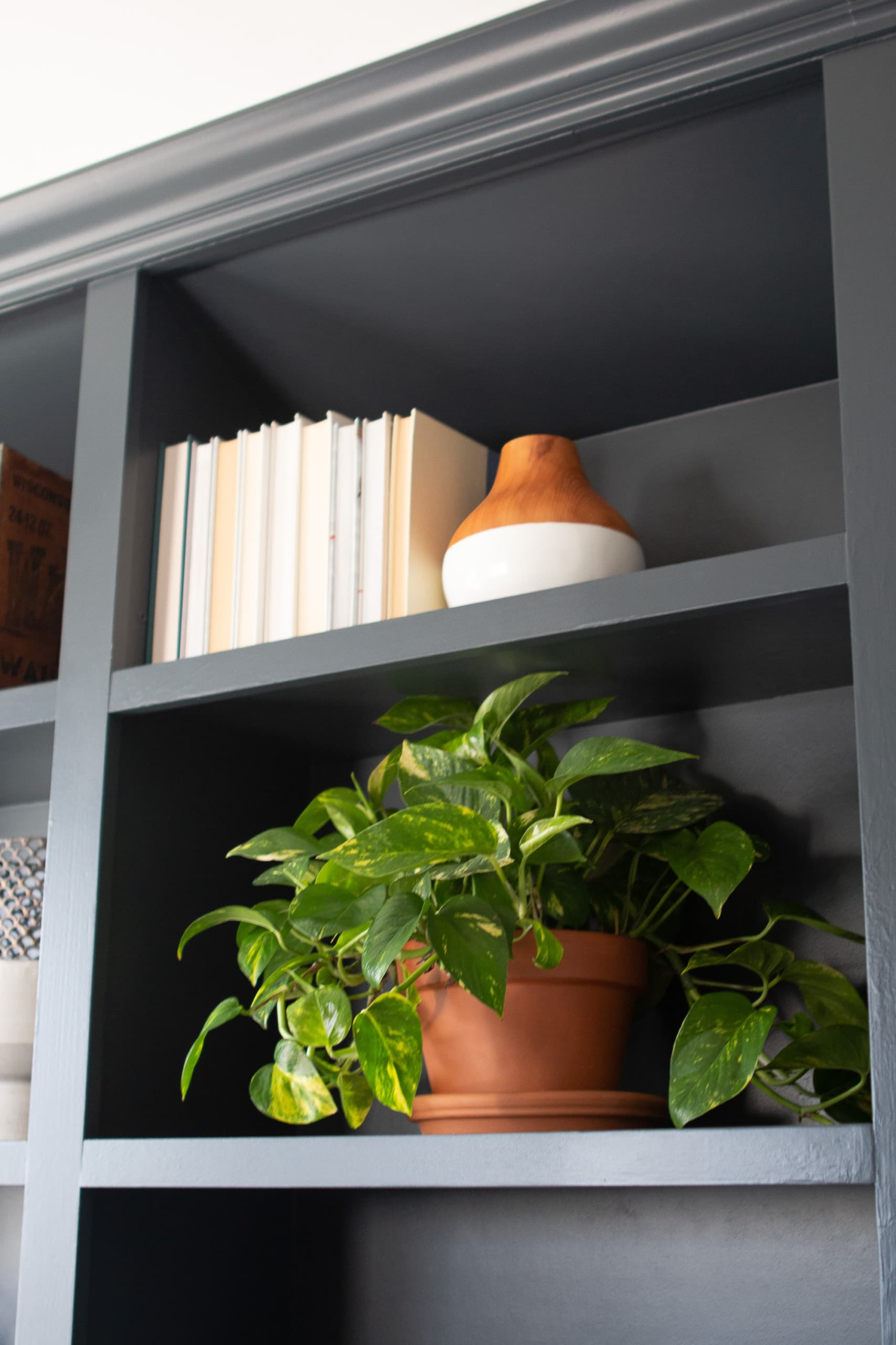 Books and plants on shelves