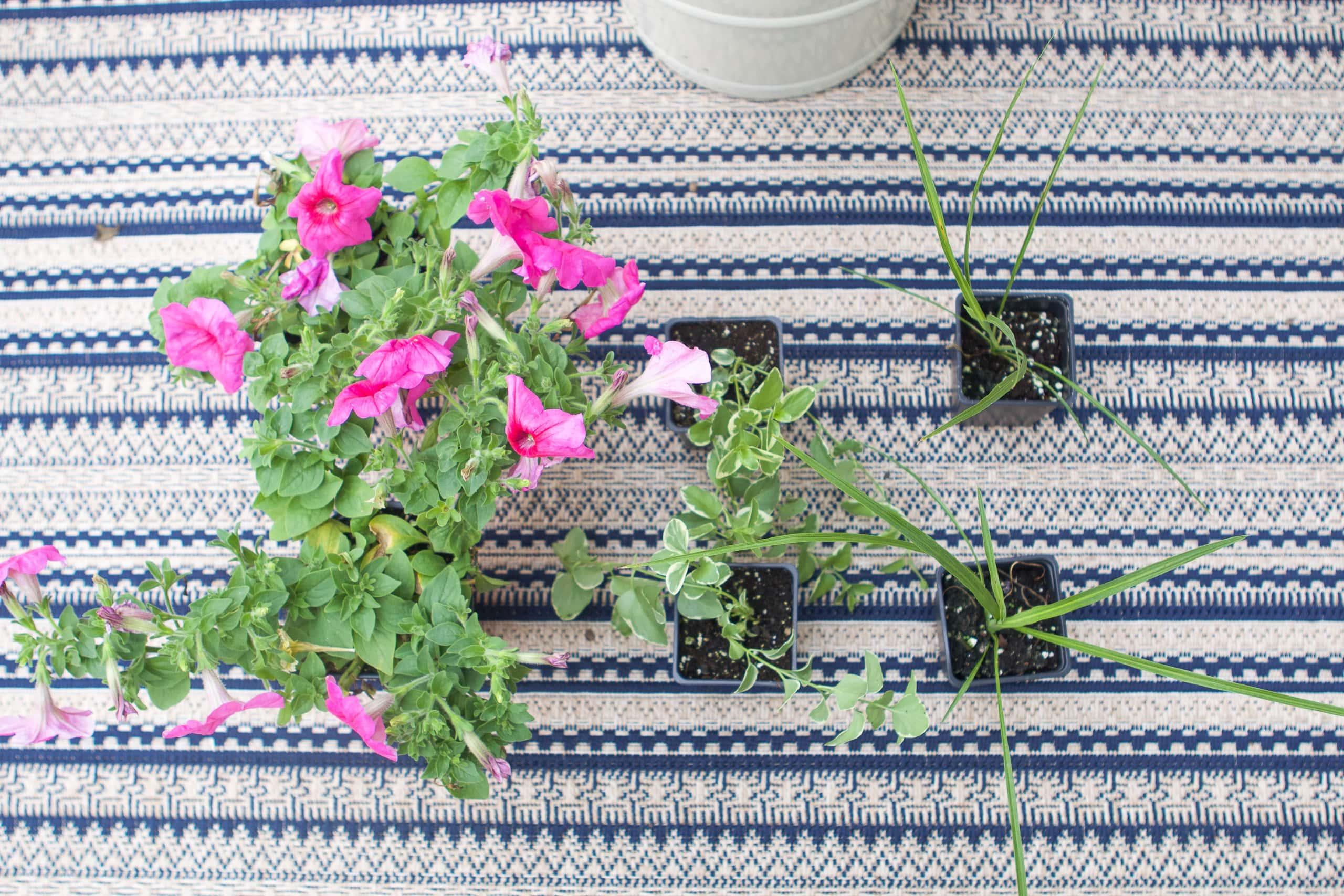 How to plant flowers in a planter