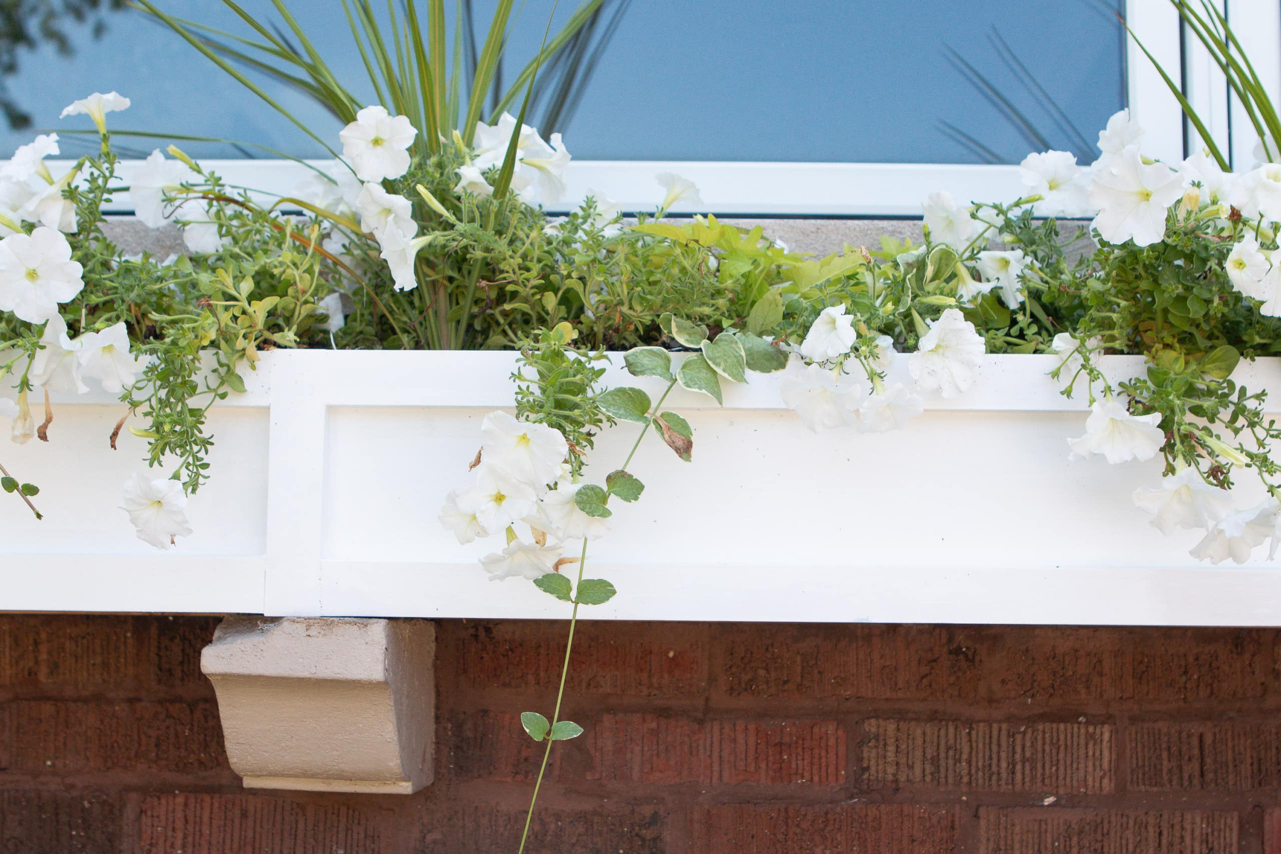 Putting plants in our window box