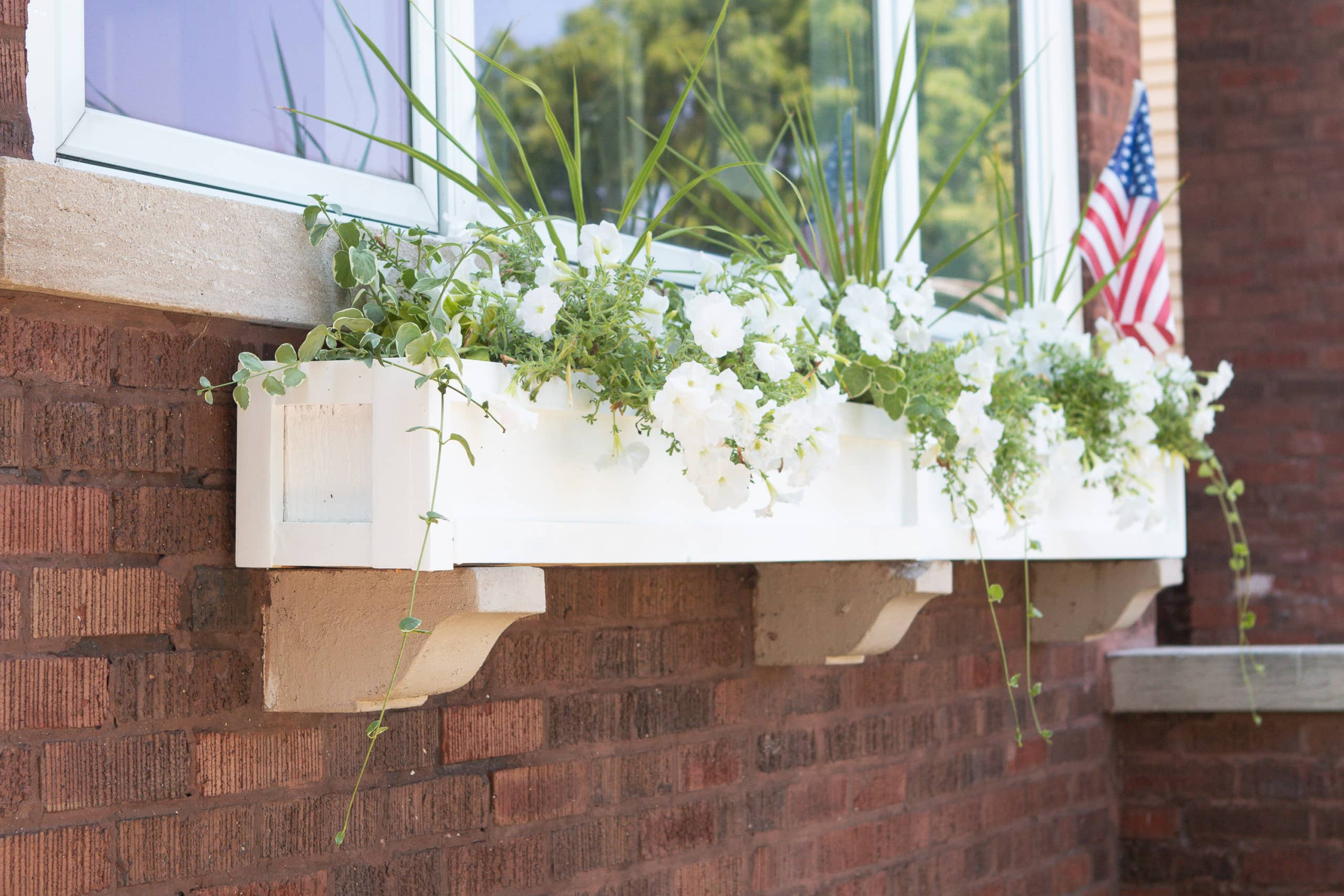 How to plant in a window box