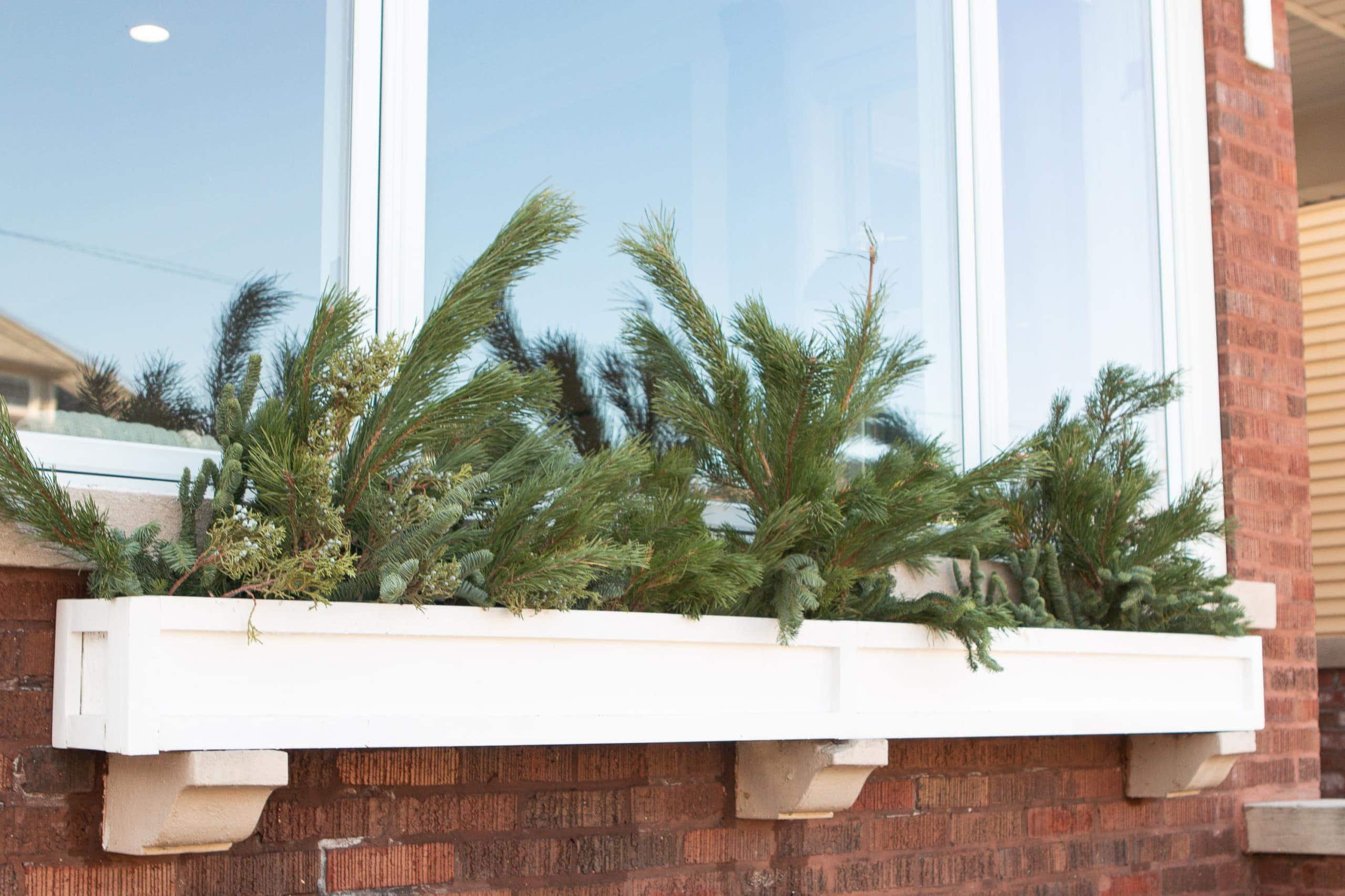 Adding greenery to a window box
