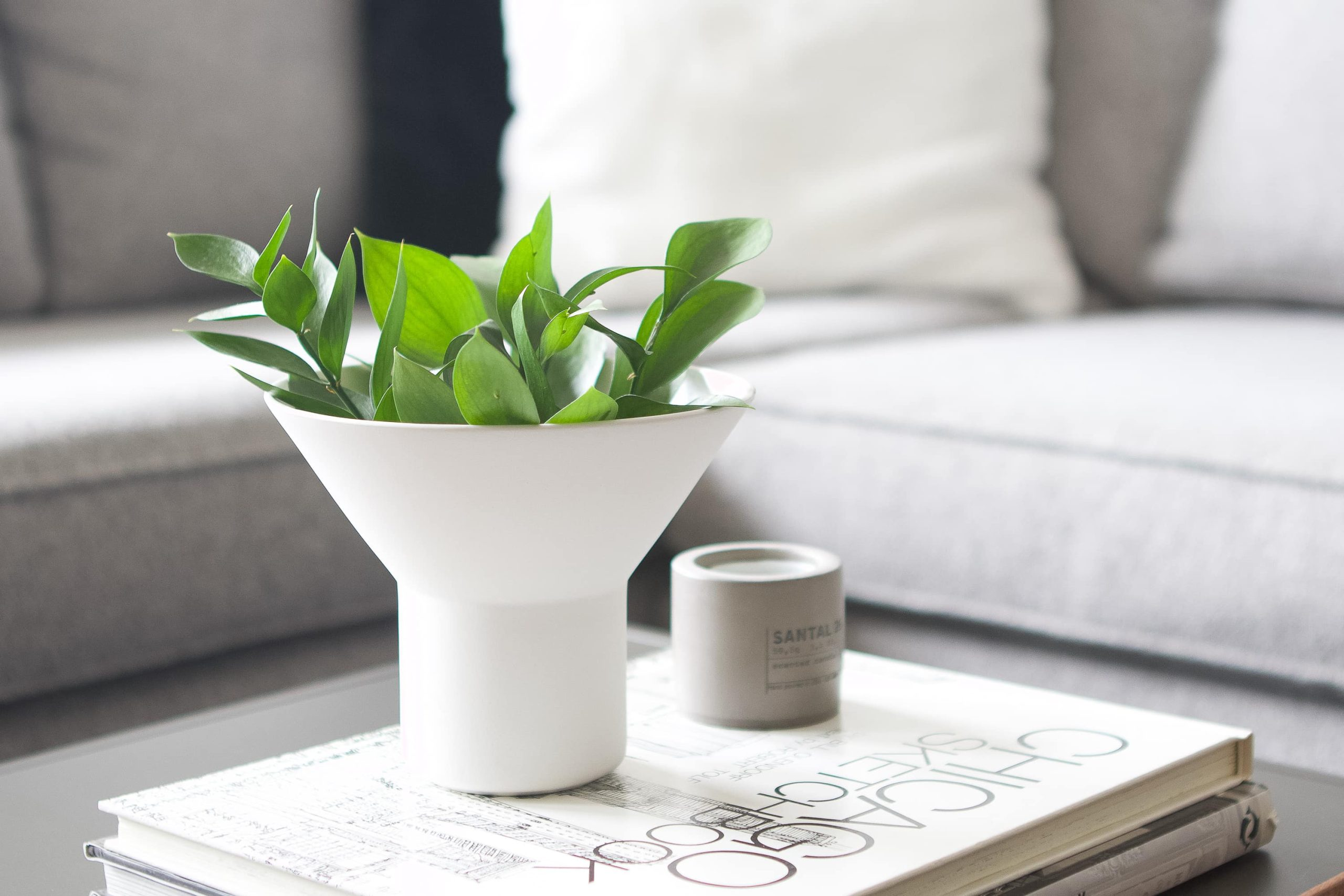 Plants on a coffee table