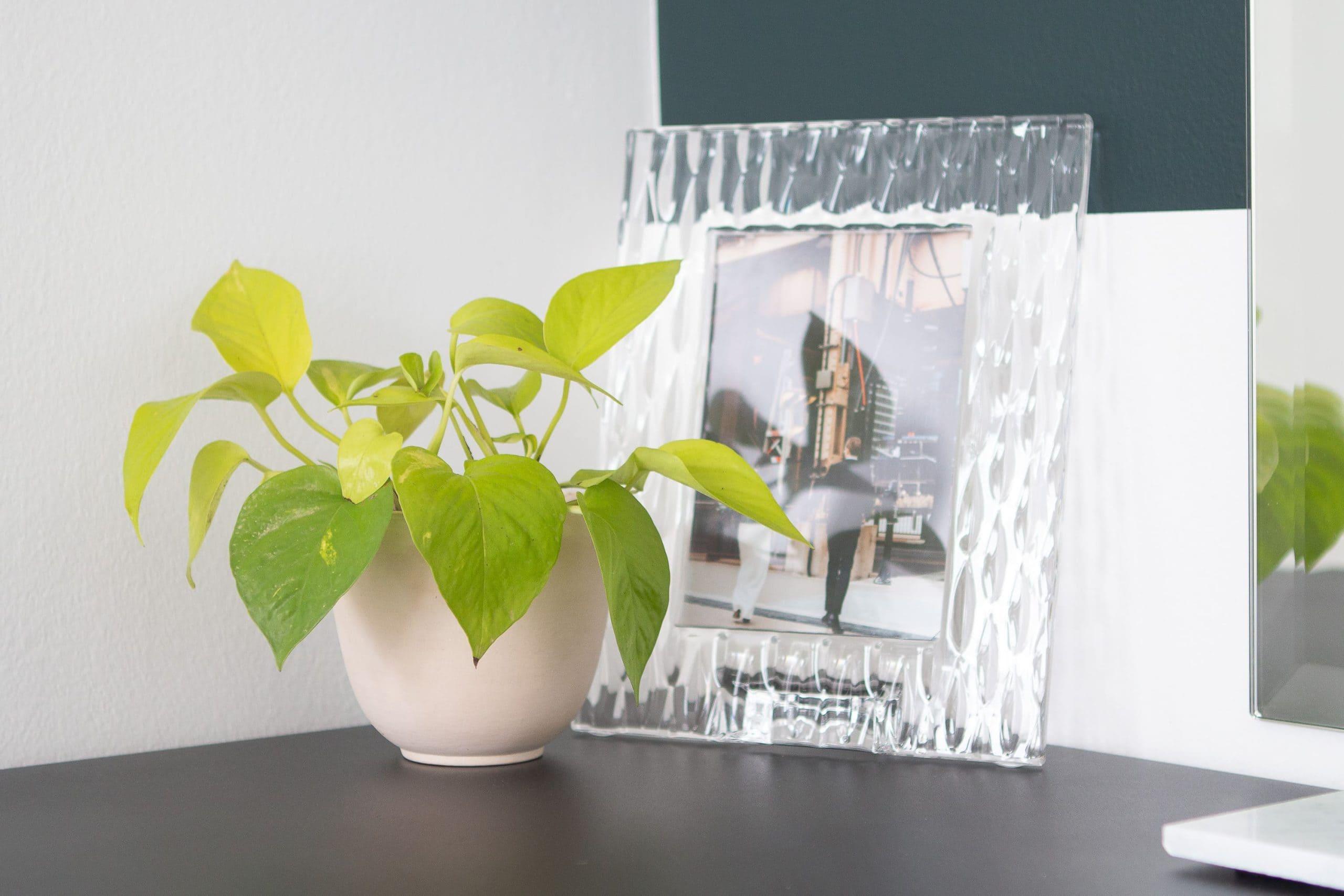 Adding plants to a vanity area