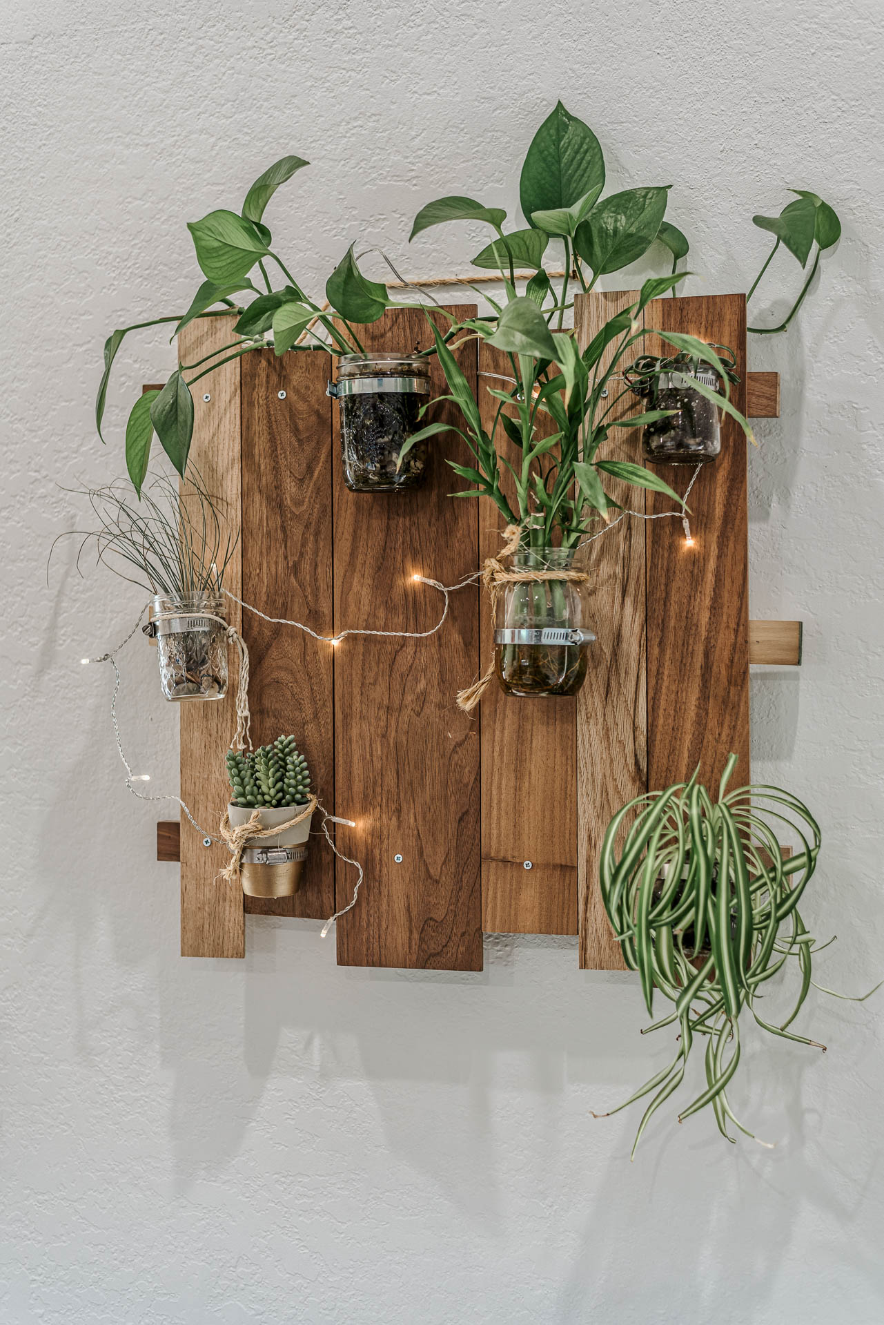 ranjini omg plant wall
